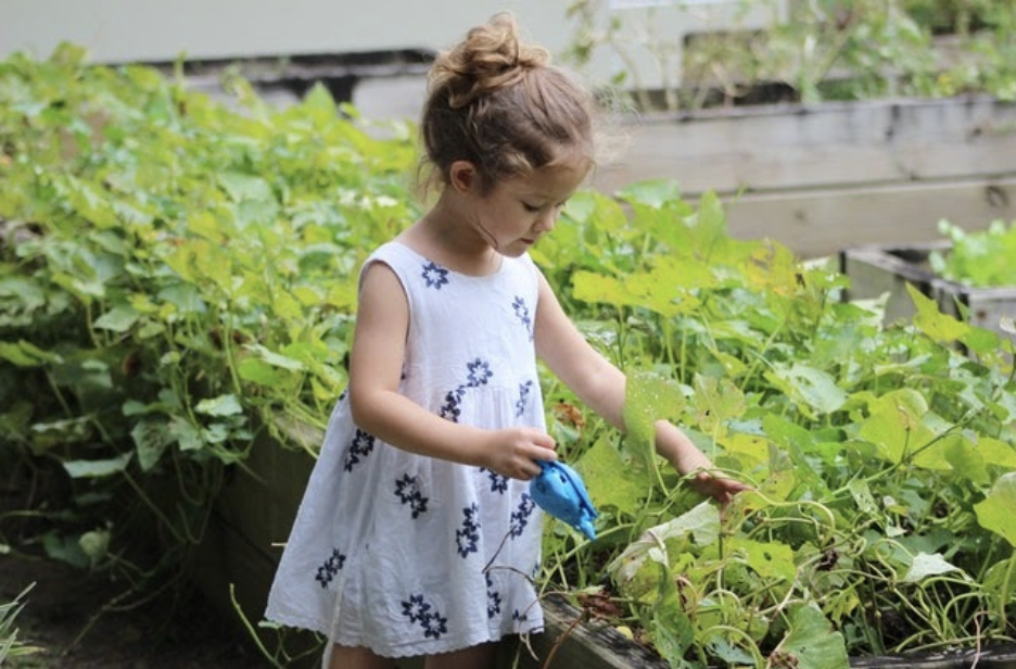 little girl watering flowers in her garden